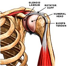 Shoulder pain and injury